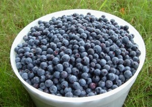 lazy days of summer eating blueberries